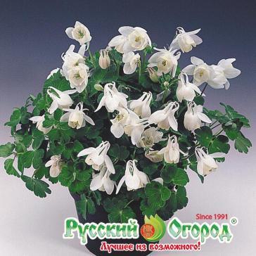 Щёлково цветы оптом