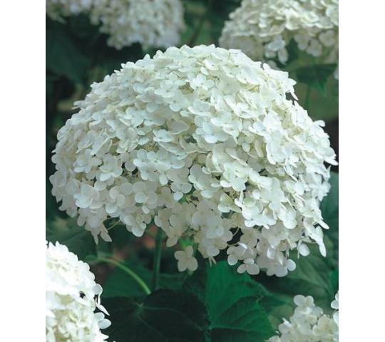 Цветы оптом в дзержинске нижегородской области #15