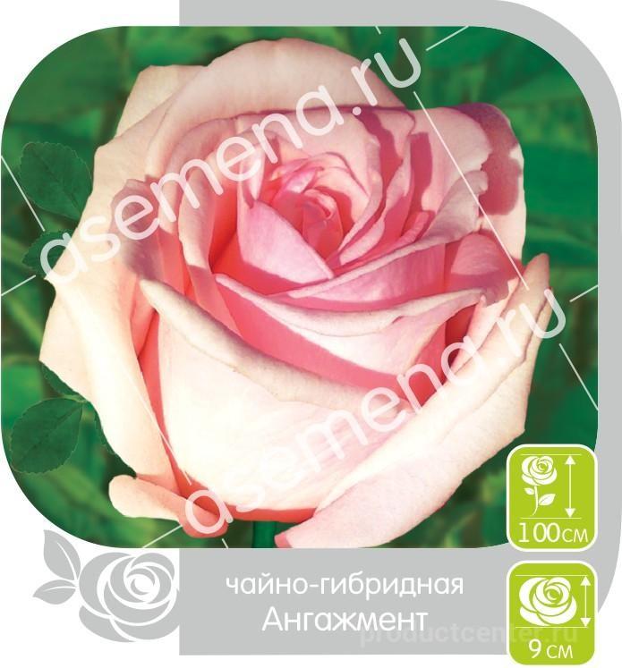 Розы оптом в барнауле